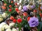 Как открыть цветочный магазин – бизнес с удовольствием